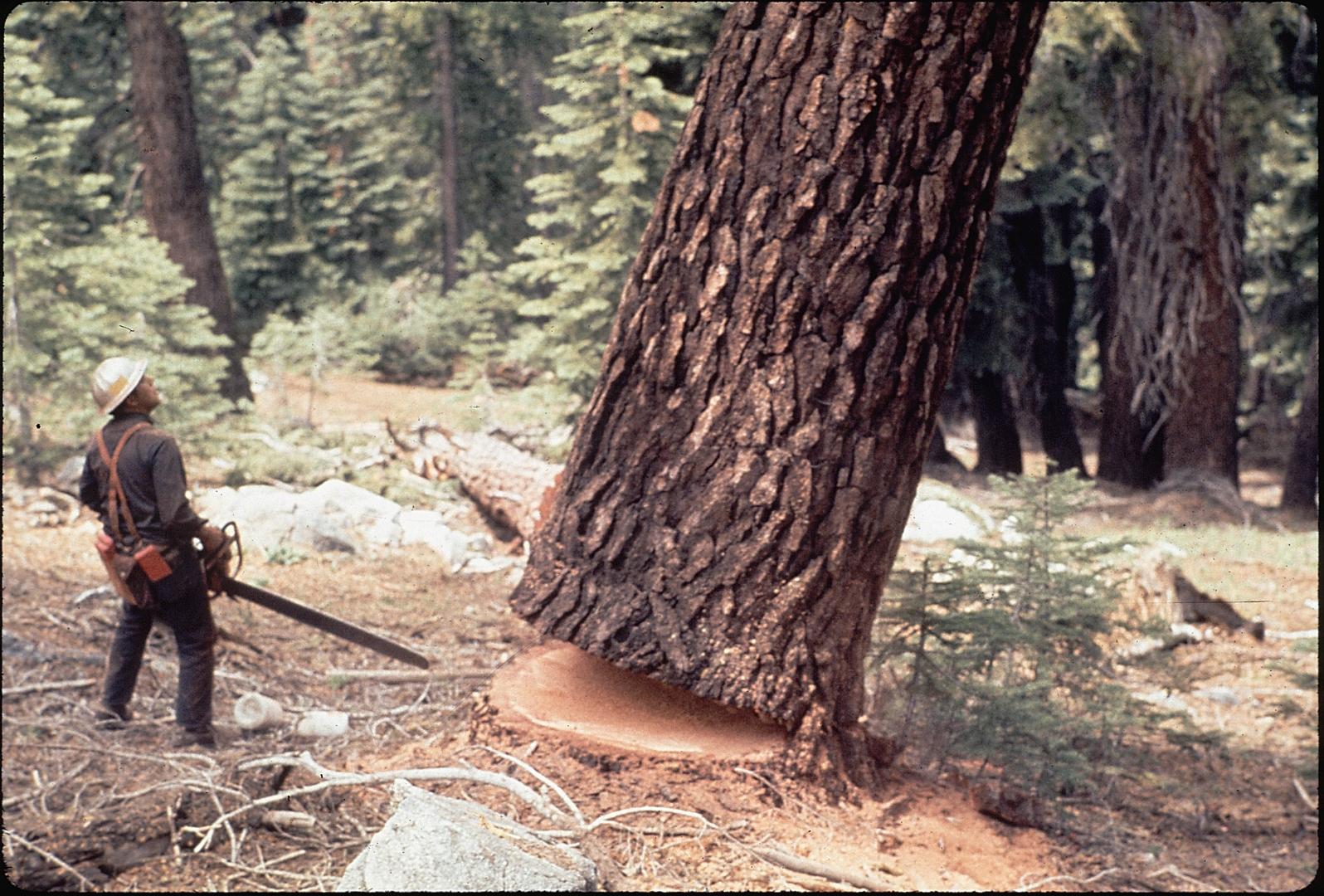 хищники, картинки лесорубы рубят лес приготовления