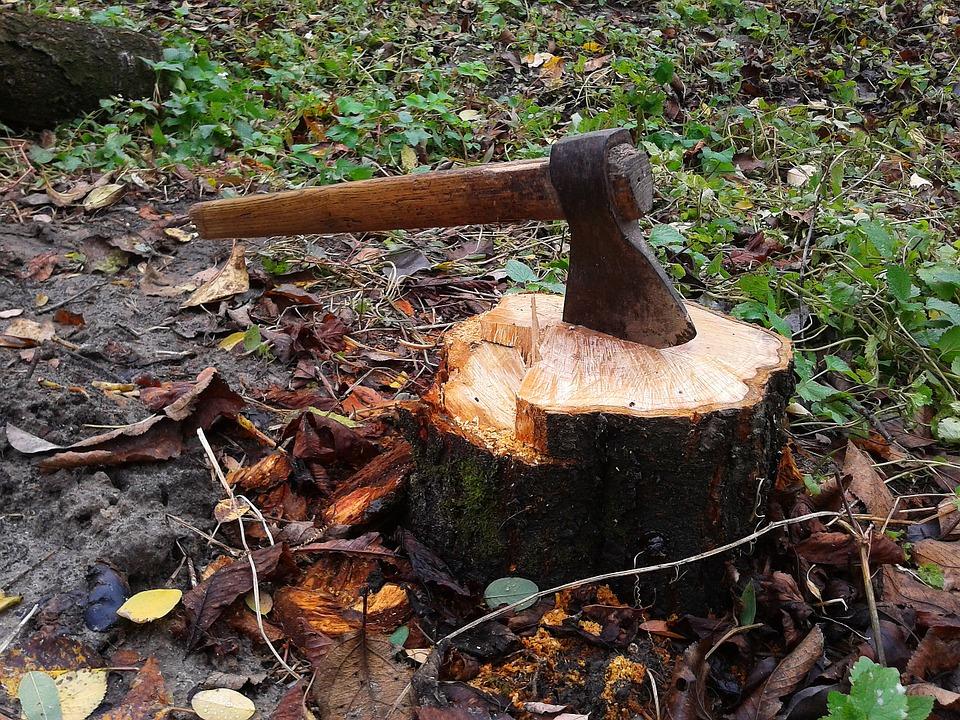Картинки вырубка деревьев, открытки-с