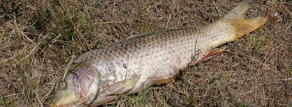 когда запрет на ловлю рыбы в иркутске